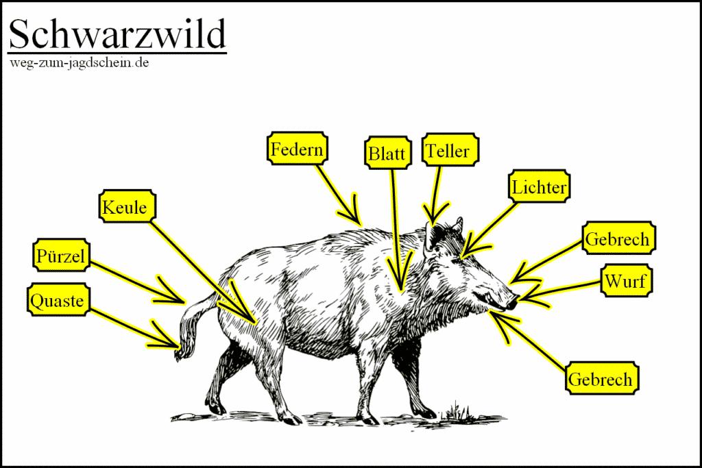 Jägersprache Begriffe