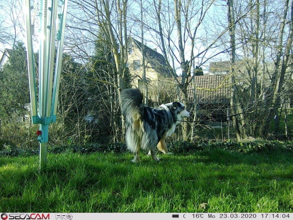 Aufnahme Secacam Pro mit Hund