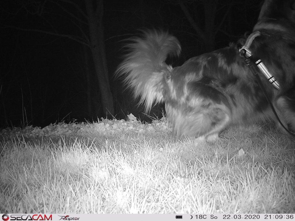 Secacam Raptor Wildkamera Bild bei Nacht