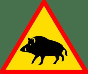 Warnschild - Schwarzwild