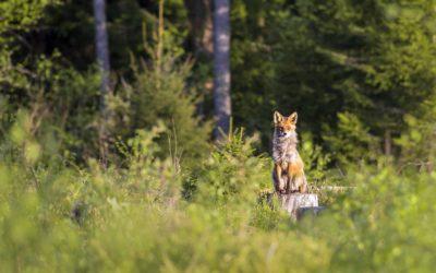 Die 5 besten Entfernungsmesser für die Jagd – Kaufberatung und Tipps