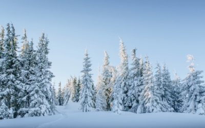 Ansitzsack Test – Die besten Ansitzsäcke für die kalten Tage im Vergleich