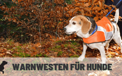 Warnwesten für Hunde im Test – Die besten Modelle für die Jagd